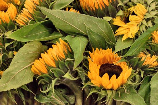 1-New-Covent-Garden-Flower-Market-Flowerona.jpg?mtime=20170928162339#asset:12023
