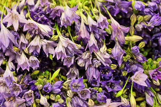1-New-Covent-Garden-Flower-Market-Flowerona_170929_130916.jpg?mtime=20170929130916#asset:12154