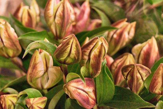 11-New-Covent-Garden-Flower-Market-Flowerona.jpg?mtime=20170928162345#asset:12033