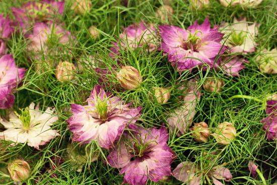 11-New-Covent-Garden-Flower-Market-Flowerona_170929_132910.jpg?mtime=20170929132909#asset:12198