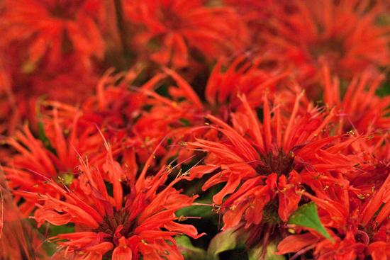13-New-Covent-Garden-Flower-Market-Flowerona_170929_130926.jpg?mtime=20170929130926#asset:12166