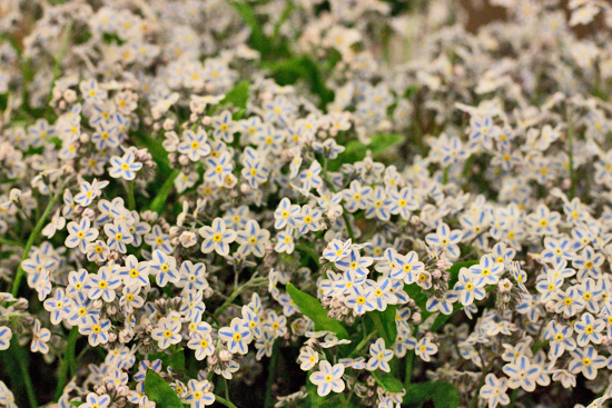 13-New-Covent-Garden-Flower-Market-Flowerona_170929_134050.jpg?mtime=20170929134049#asset:12233