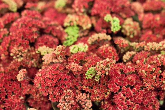14-New-Covent-Garden-Flower-Market-Flowerona.jpg?mtime=20170928162347#asset:12036