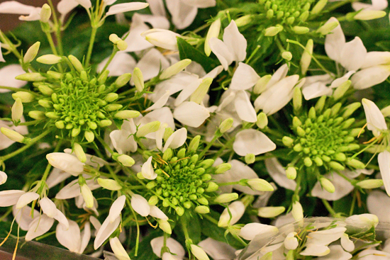 14-New-Covent-Garden-Flower-Market-Flowerona_170929_132912.jpg?mtime=20170929132912#asset:12201