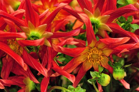 15-New-Covent-Garden-Flower-Market-Flowerona.jpg?mtime=20170928162347#asset:12037