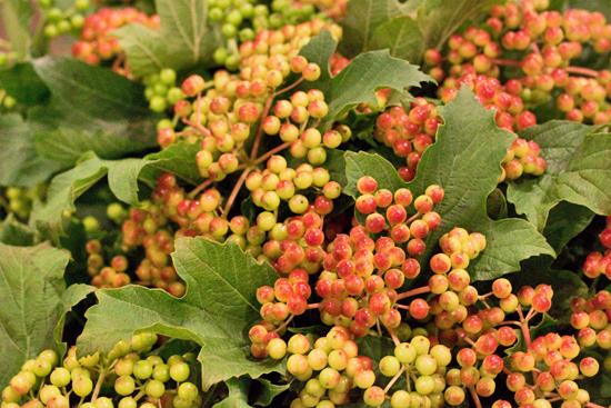 15-New-Covent-Garden-Flower-Market-Flowerona_170929_130927.jpg?mtime=20170929130927#asset:12168