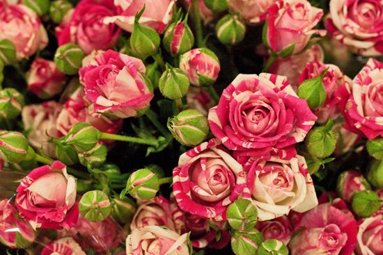 18-New-Covent-Garden-Flower-Market-Flowerona.jpg?mtime=20170928162351#asset:12040