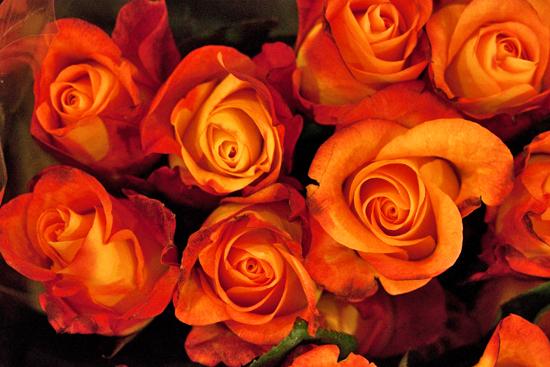 19-New-Covent-Garden-Flower-Market-Flowerona.jpg?mtime=20170928162352#asset:12041