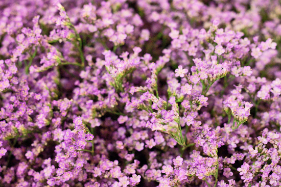 19-New-Covent-Garden-Flower-Market-Flowerona_170929_132915.jpg?mtime=20170929132915#asset:12206
