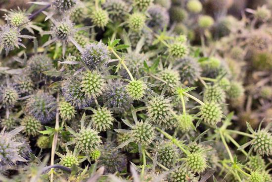 2-New-Covent-Garden-Flower-Market-Flowerona_170929_130917.jpg?mtime=20170929130917#asset:12155