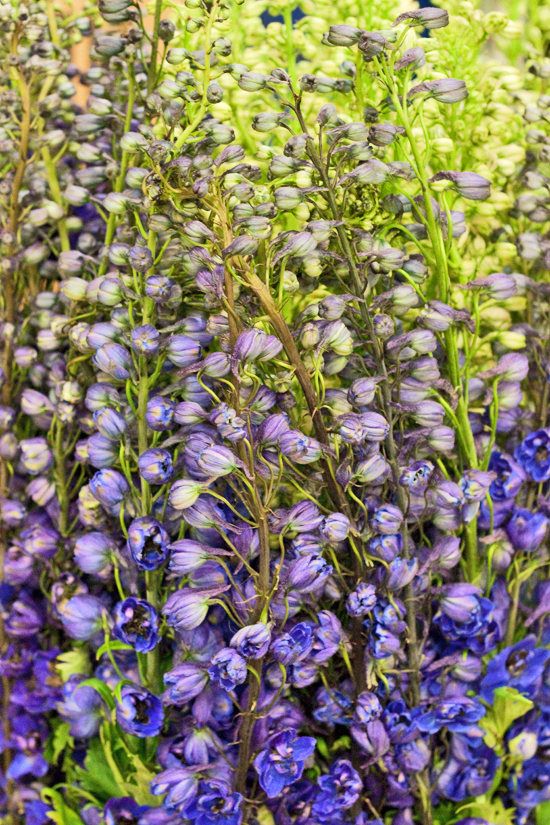 2-New-Covent-Garden-Flower-Market-Flowerona_170929_132902.jpg?mtime=20170929132902#asset:12189