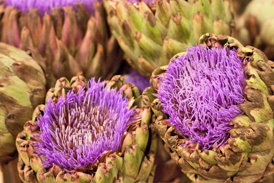 20-New-Covent-Garden-Flower-Market-Flowerona_170929_132916.jpg?mtime=20170929132916#asset:12207