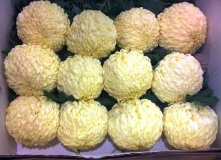 2012-01-Geater-of-Suffolk-blooms.jpg?mtime=20171003170642#asset:12818