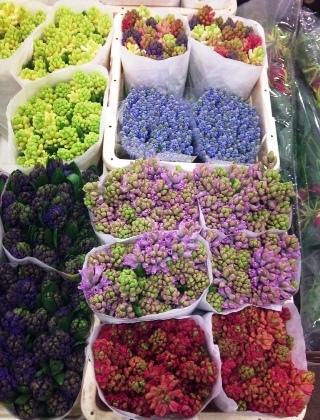 2012-01-hyacinths-and-muscari.jpg?mtime=20171003170618#asset:12816