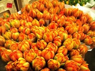 2012-01-orange-tulips.jpg?mtime=20171003170654#asset:12819