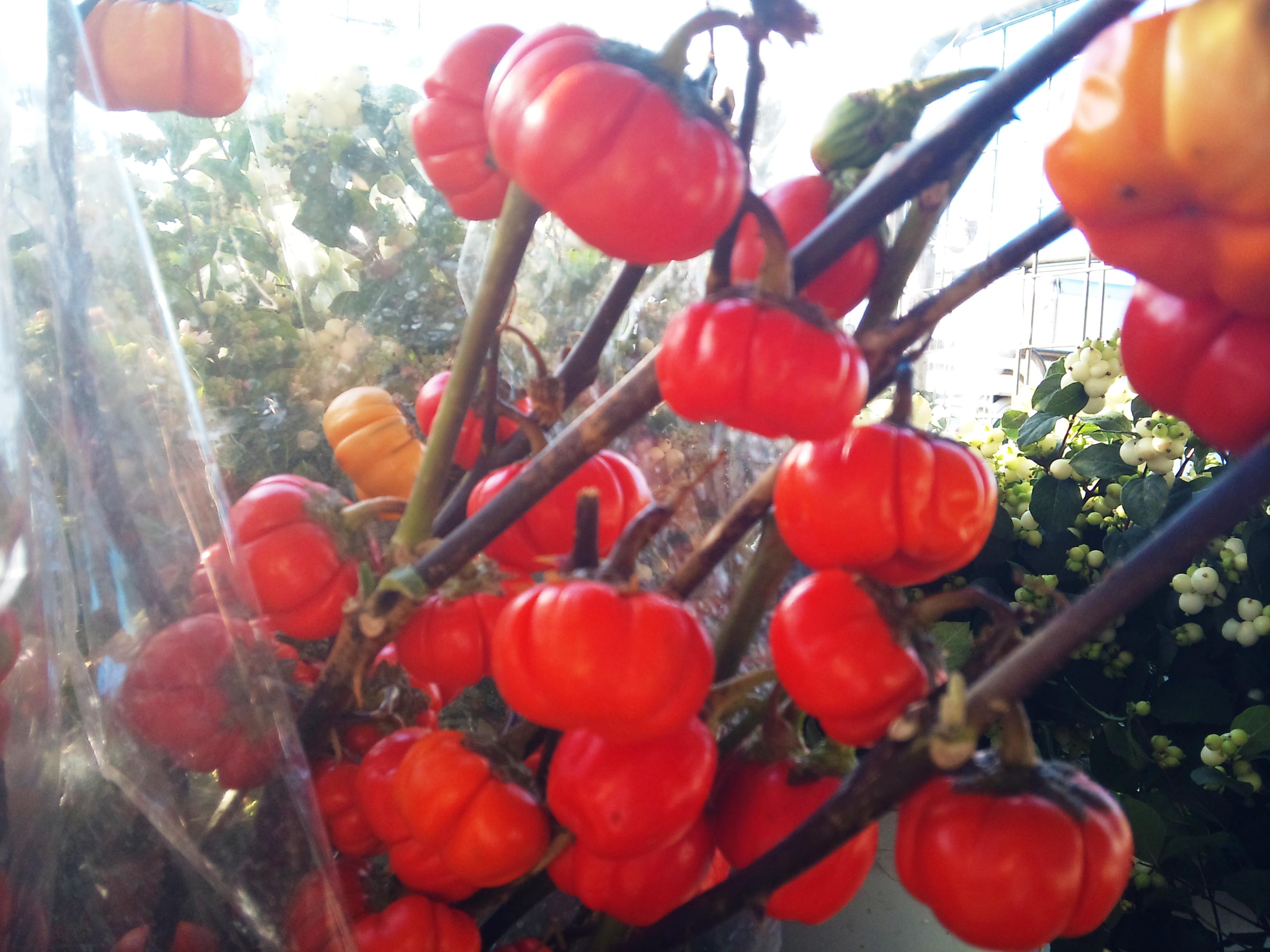 2012-09-aubergines.jpg?mtime=20171003163453#asset:12735