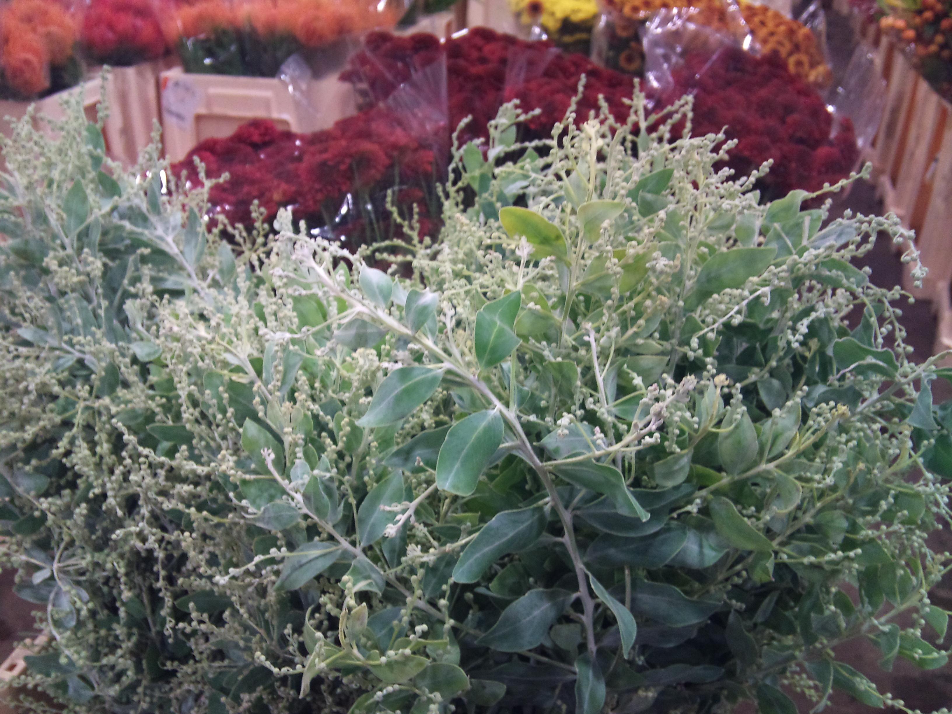 2012-11-mimosa-foliage.jpg?mtime=20171003160356#asset:12698