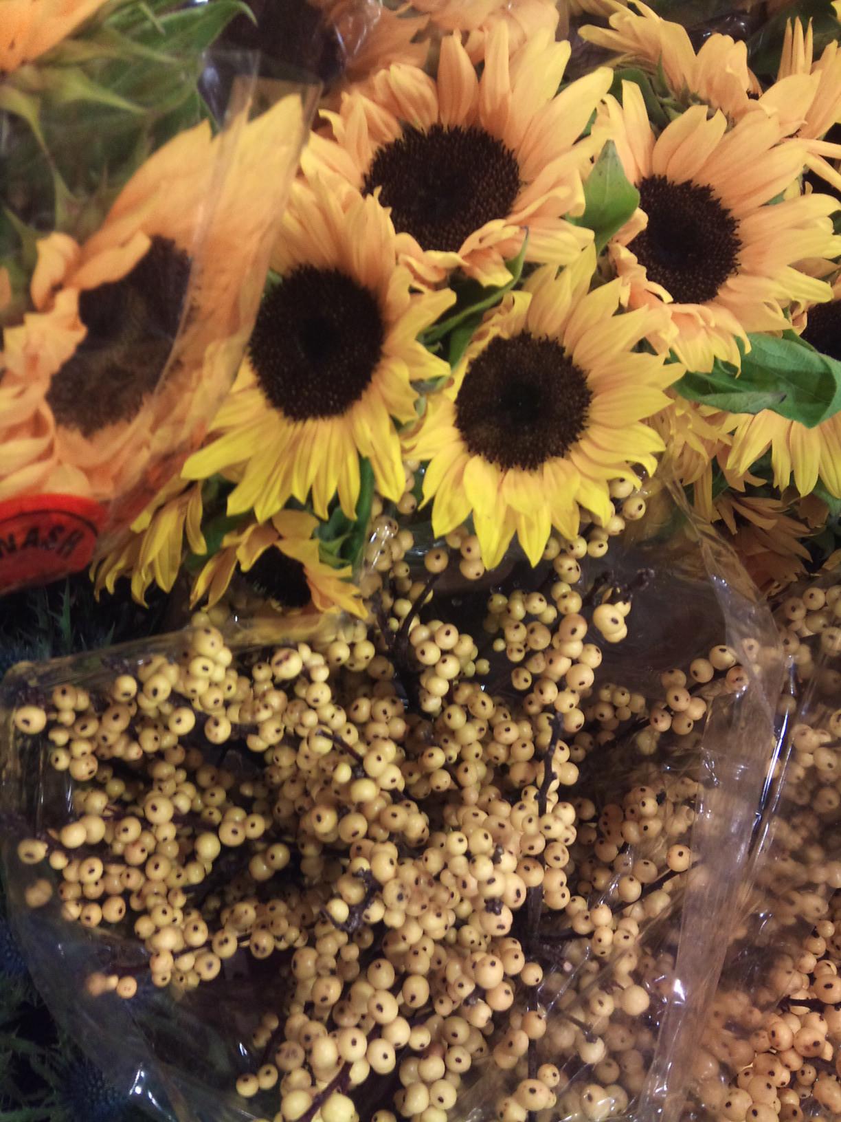 2012-12-sunflower-ilex.jpg?mtime=20171003154133#asset:12666