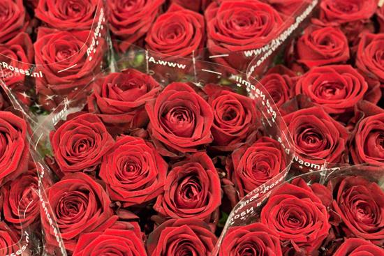 2013-02-Image-1-Bloomfield-Red-Naomi-Flowerona.jpg?mtime=20171003151734#asset:12551