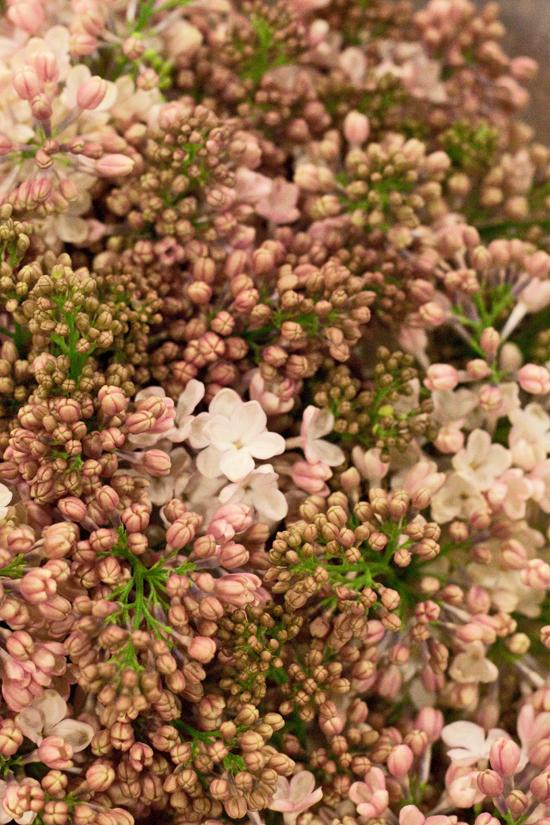 2013-02-Image-10-SR-Allen-Maidens-Blush-Lilac-Flowerona.jpg?mtime=20171003151740#asset:12560