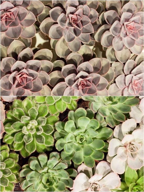 2013-02-Image-19-Succulents.jpg?mtime=20171003151747#asset:12569
