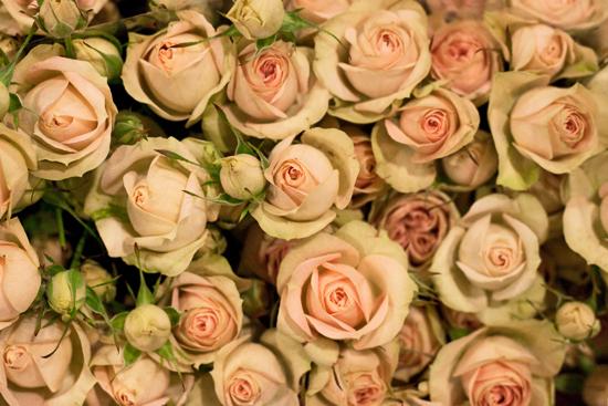 2013-02-Image-4-Bloomfield-Romantic-Pepita-Spray-Roses-Flowerona.jpg?mtime=20171003151736#asset:12554