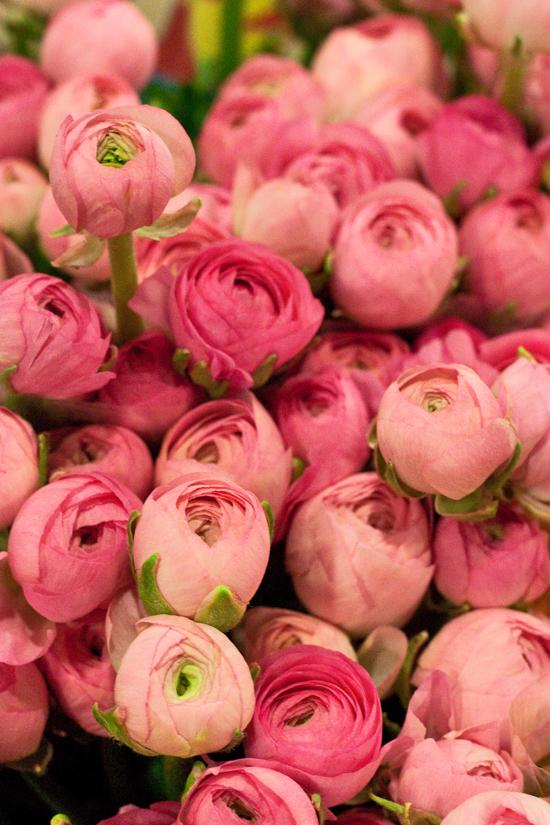 2013-02-Image-7-Alagar-Pink-Ranunculus-Flowerona.jpg?mtime=20171003151737#asset:12557