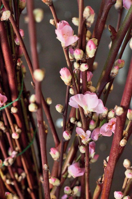 2013-02-Image-8-Porters-Foliage-Peach-blossom-Flowerona.jpg?mtime=20171003151738#asset:12558