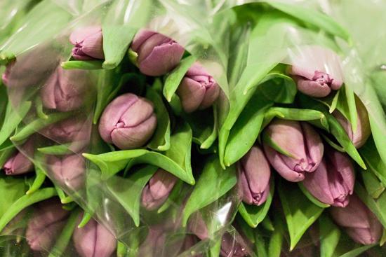 2013-02-Image-9-Pratleys-Tulips-Flowerona.jpg?mtime=20171003151739#asset:12559
