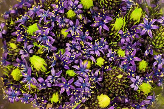 2013-03-12-Scilla-Flowerona.jpg?mtime=20170929144907#asset:12338