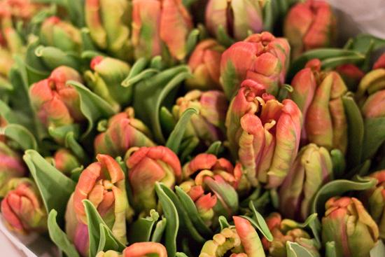 2013-03-2-Parrot-Tulips-1-Flowerona.jpg?mtime=20170929144901#asset:12328