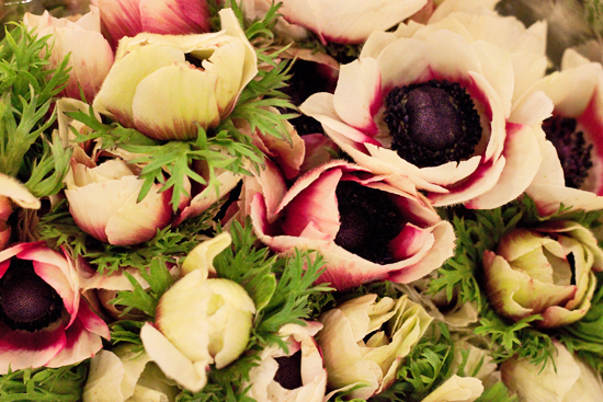 2013-04-1-Anemones-New-Covent-Garden-Flower-Market-Flowerona.jpg?mtime=20170929143146#asset:12297
