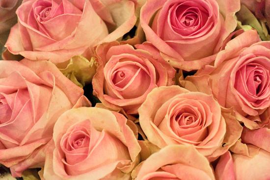 2013-04-20-Sorbet-Avalanche-Rose-Zest-Flowers-New-Covent-Garden-Flower-Market-Flowerona.jpg?mtime=20170929143157#asset:12316