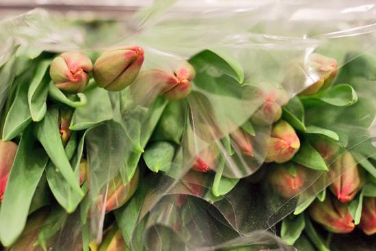 2013-04-26-Tulips-Pratley-New-Covent-Garden-Flower-Market-Flowerona-1.jpg?mtime=20170929143202#asset:12322
