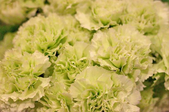 2013-04-7-Goblin-Carnation-Bloomfield-New-Covent-Garden-Flower-Market-Flowerona.jpg?mtime=20170929143150#asset:12303