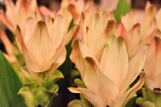 22-New-Covent-Garden-Flower-Market-Flowerona_170929_132918.jpg?mtime=20170929132917#asset:12209