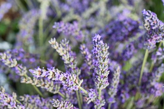 29-New-Covent-Garden-Flower-Market-Flowerona_170929_132924.jpg?mtime=20170929132924#asset:12216