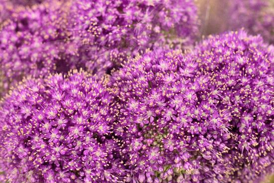 5-New-Covent-Garden-Flower-Market-Flowerona_170929_134044.jpg?mtime=20170929134044#asset:12225