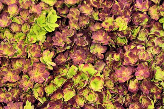 6-New-Covent-Garden-Flower-Market-Flowerona.jpg?mtime=20170928162342#asset:12028