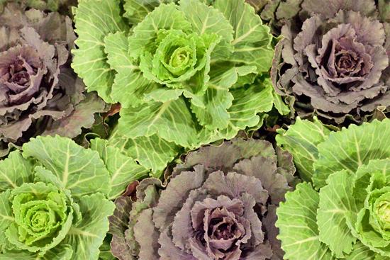 7-New-Covent-Garden-Flower-Market-Flowerona.jpg?mtime=20170928162342#asset:12029