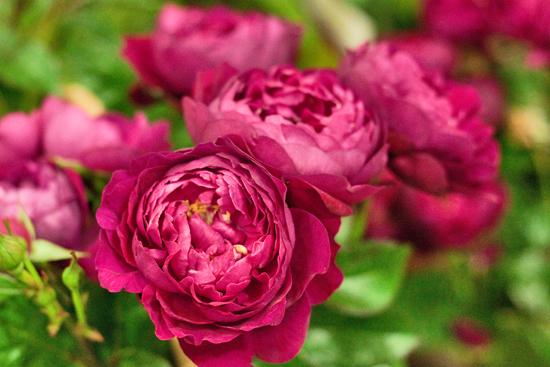 7-New-Covent-Garden-Flower-Market-Flowerona_170929_130921.jpg?mtime=20170929130920#asset:12160