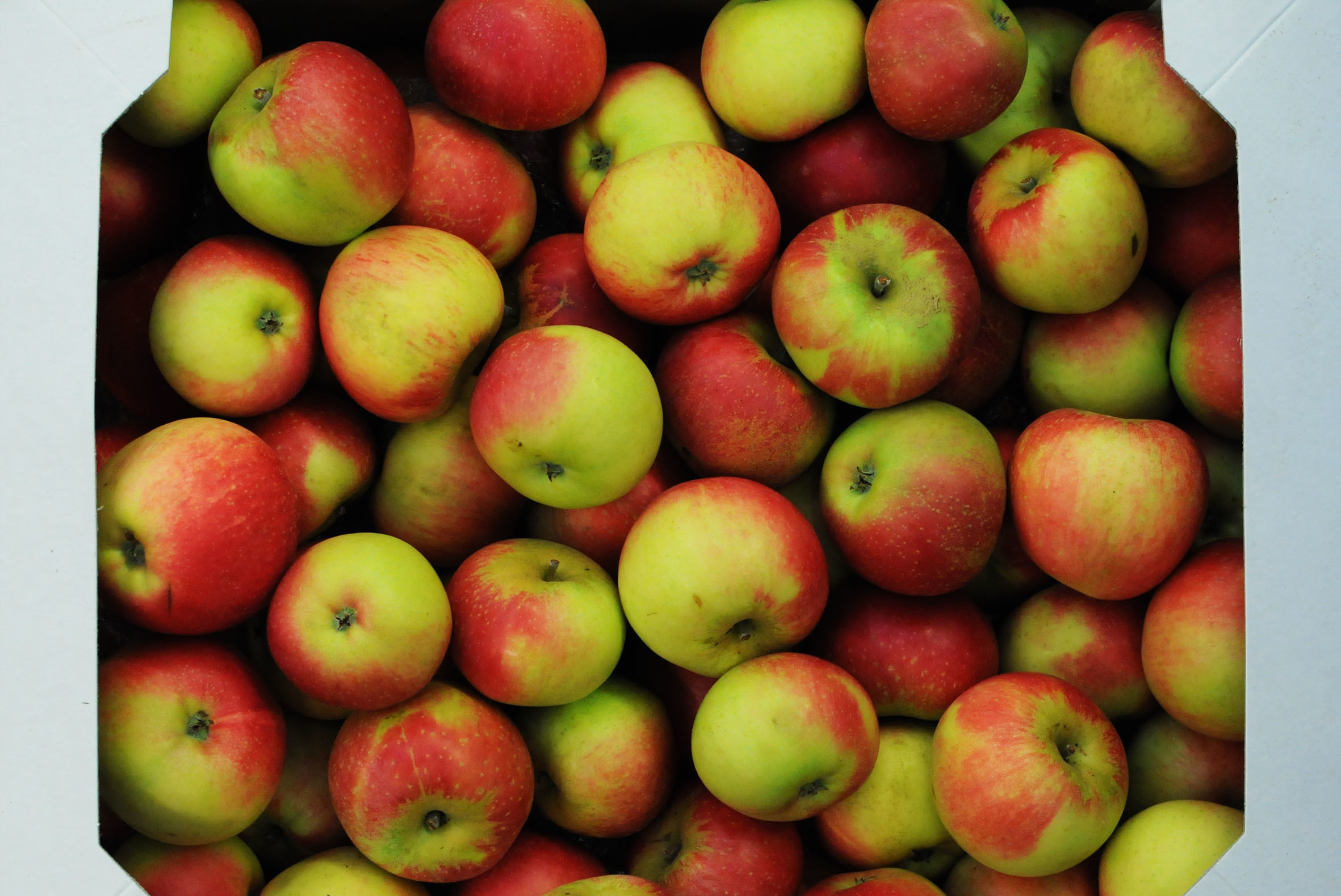 Discovery_apples.jpg?mtime=20170922121309#asset:11431