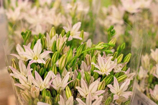 New-Covent-Garden-Flower-Market-January-2014-Flowerona-20.jpg?mtime=20170914105209#asset:10522