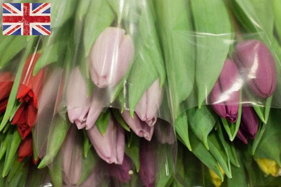 New-Covent-Garden-Flower-Market-January-2015-Market-Report-Flowerona_-2.png?mtime=20170908151450#asset:9773