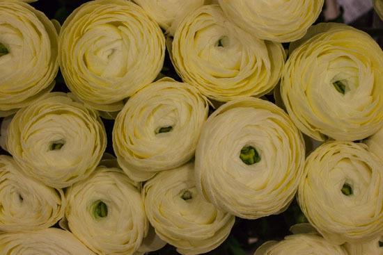 New-Covent-Garden-Flower-Market-January-2015-Market-Report-Flowerona_-6.jpg?mtime=20170908151452#asset:9777