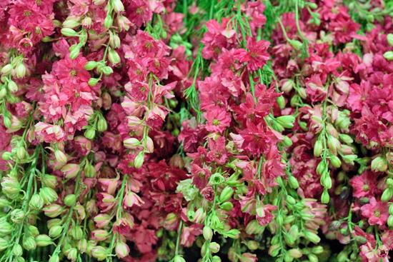 New-Covent-Garden-Flower-Market-July-Market-Report-Flowerona-1.jpg?mtime=20170913122418#asset:10140