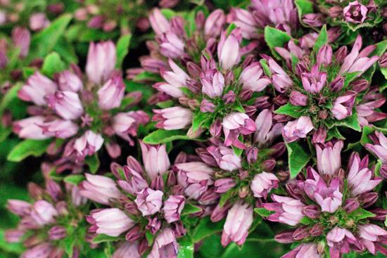 New-Covent-Garden-Flower-Market-July-Market-Report-Flowerona-10.jpg?mtime=20170913122242#asset:10149