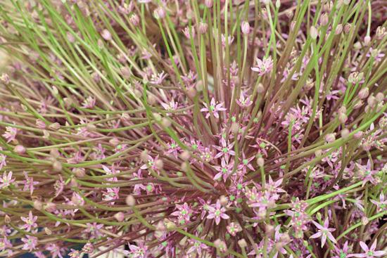 New-Covent-Garden-Flower-Market-July-Market-Report-Flowerona-11.jpg?mtime=20170913122243#asset:10150