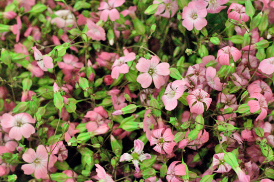 New-Covent-Garden-Flower-Market-July-Market-Report-Flowerona-12.jpg?mtime=20170913122244#asset:10151