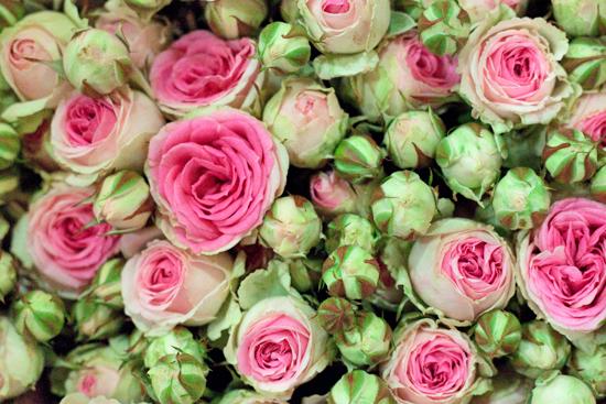 New-Covent-Garden-Flower-Market-July-Market-Report-Flowerona-13.jpg?mtime=20170913122244#asset:10152